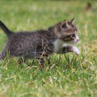 schattige-kitten